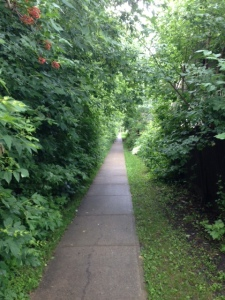 A beautiful walk along the Red Willow Trail through Lacombe Park.