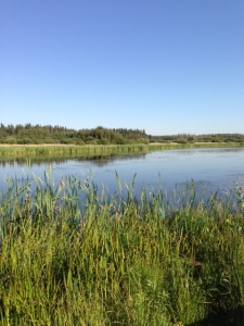 The Sturgeon River as it exits Big Lake - Right on the edge of downtown!